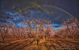 yuba city, california, northern california, rainbow, almonds, almond orchard, sutter coutny